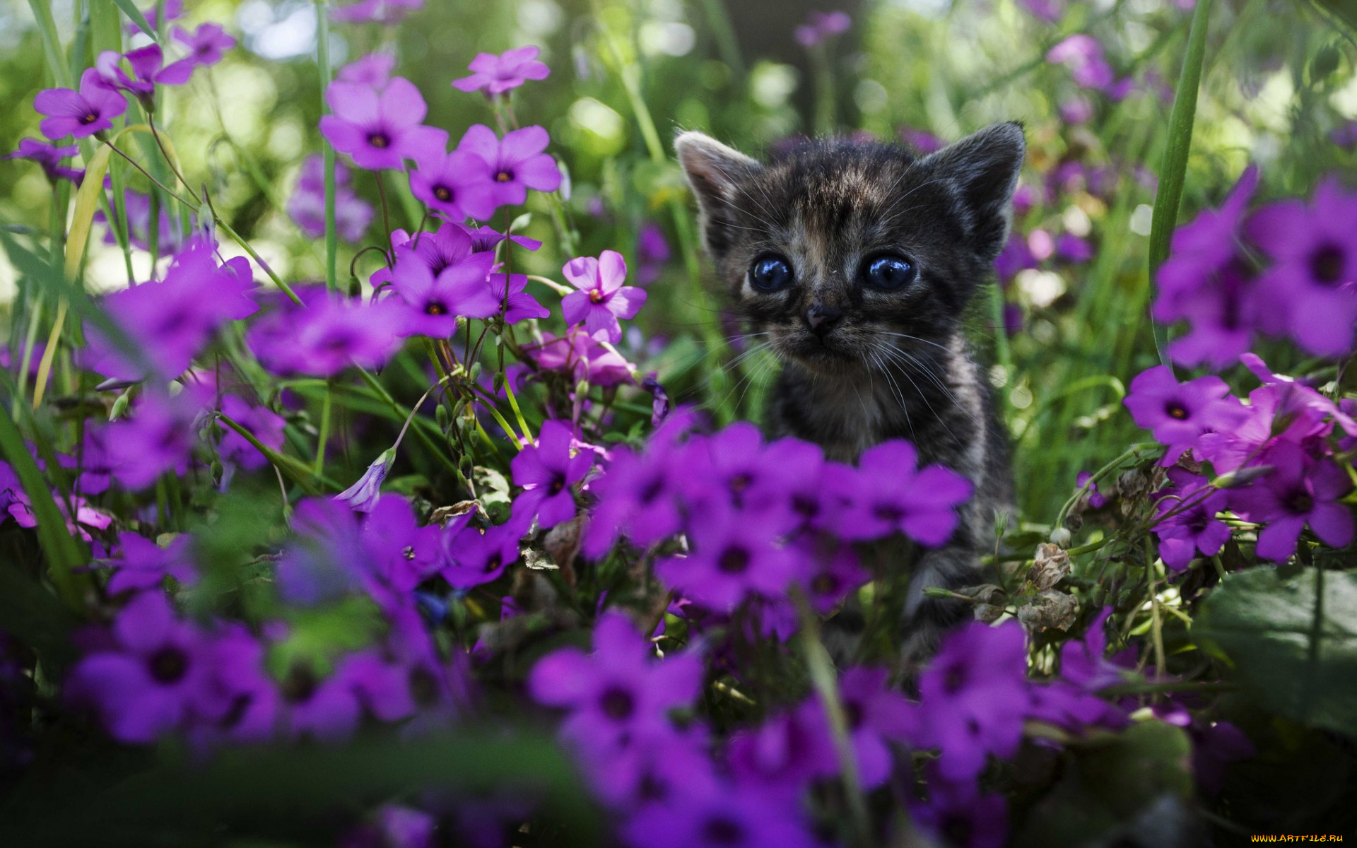 нахимовский фиолетовые животные фото анна
